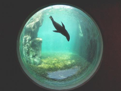 Living Coasts seal porthole